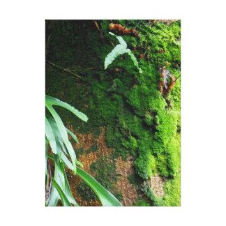 Rain Forest Moss Canvas Print