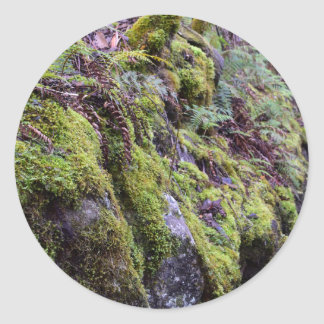 RAIN FOREST MT FIELD NATIONAL PARK TASMANIA CLASSIC ROUND STICKER