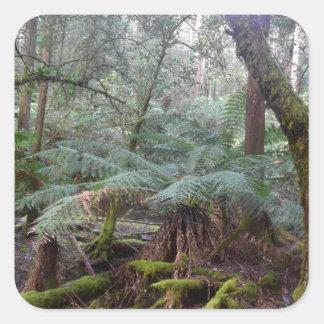 RAIN FOREST MT FIELD NATIONAL PARK TASMANIA SQUARE STICKER