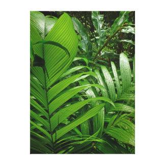Rain Forest Palms Canvas Print