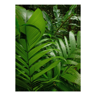 Rain Forest Palms Posters