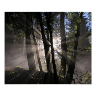 Rain Forest Sun Rays Poster
