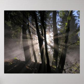 Rain Forest Sun Rays Poster