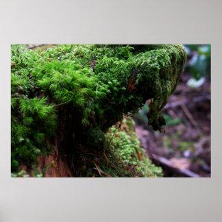 Rain Forest Xenoform 1, Archival Paper Poster