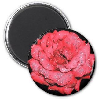 Rain Kissed Rose 2 Inch Round Magnet