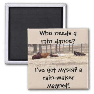 Rain-Maker (Cows Are Lying Down) Square Magnet