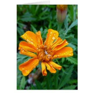 rain makes the flowers grow card