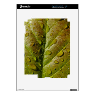 Rain On A Magnolia Leaf Decal For The iPad 2