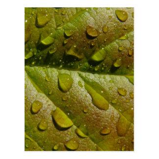 Rain On A Magnolia Leaf Postcard