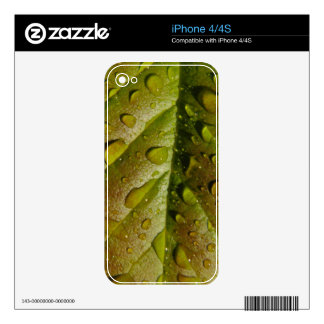 Rain On A Magnolia Leaf Skins For The iPhone 4S