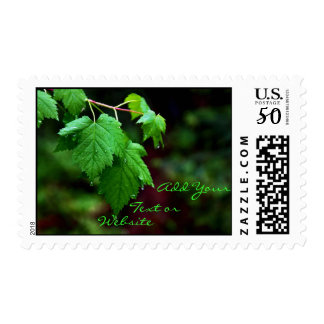 Rain on Leaves Postage Stamps
