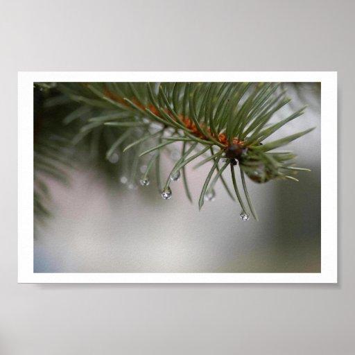 Rain on Pine Needles Poster