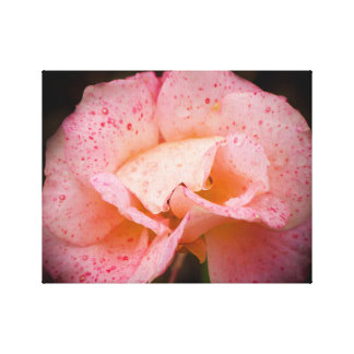 Rain on the shades of Rose Canvas Print