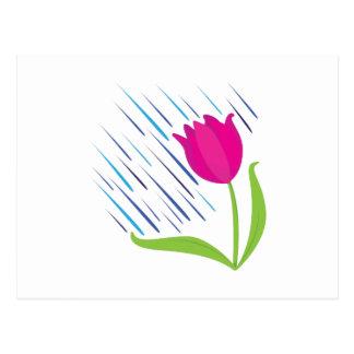 Rain On Tulip Postcard