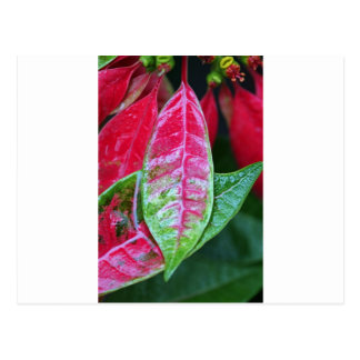Rain soaked red and green leaf postcard