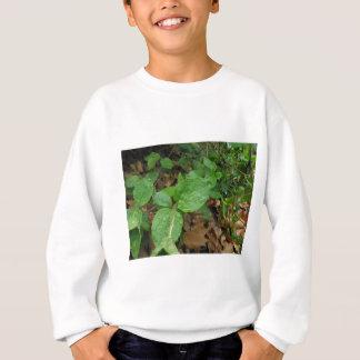 Rain Sweatshirt