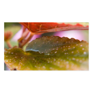 Rain Wet Autumn Fall Leaves Double-Sided Standard Business Cards (Pack Of 100)