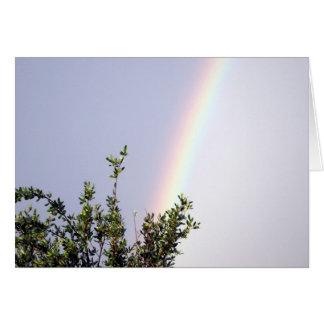Rainbow 204 card