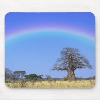 Rainbow and African baobab tree, Adansonia Mouse Pad