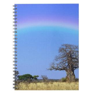 Rainbow and African baobab tree, Adansonia Notebook