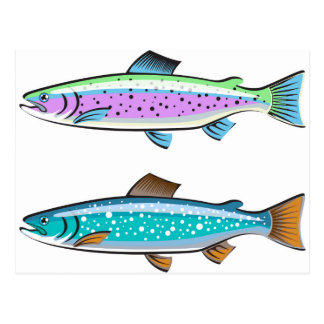 Rainbow and Lake trout Postcard