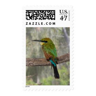 Rainbow bee-eater bird, Australia Postage