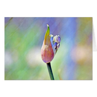 Rainbow Bloom Greeting Cards