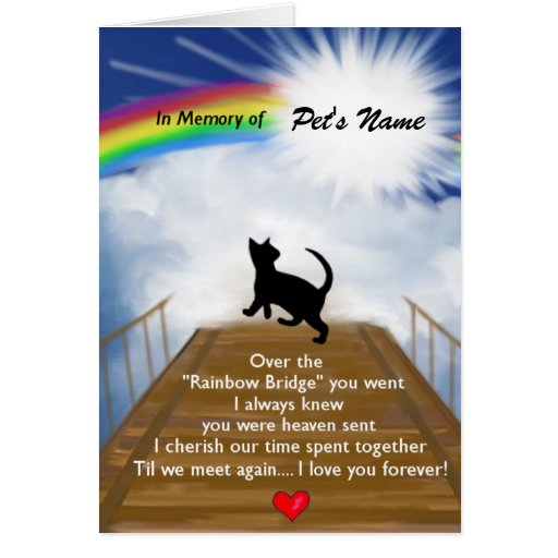 Pictures Of Rainbow Bridge For Cats