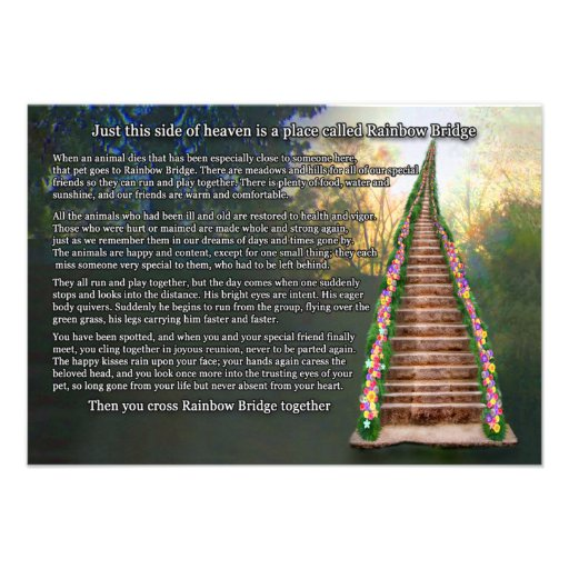 Rainbow Bridge Pet Loss Sympathy Card   Invitation