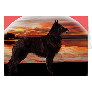 Rainbow Bridge Sympathy Card: Belgian Tervuren Card