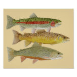 Rainbow,Brown & Brook Trout on Colorful background Print