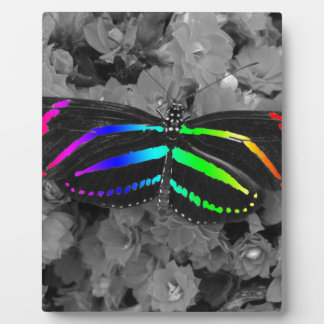Rainbow Butterfly Color Pop Photography Plaque