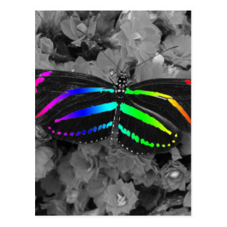 Rainbow Butterfly Color Pop Photography Postcard