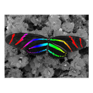 Rainbow Butterfly Color Pop Photography Postcard