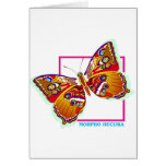 rainbow butterfly two cards