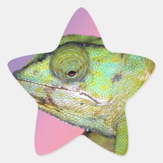 Rainbow chameleon star sticker