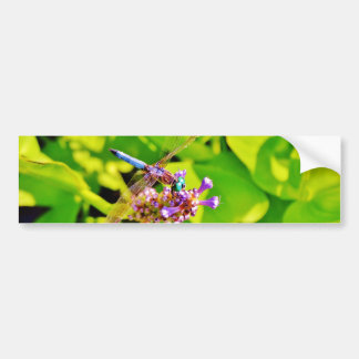 Rainbow colored Dragonfly  on a purple pink flower Bumper Sticker
