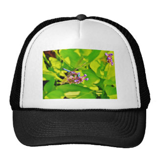 Rainbow colored Dragonfly on a purple pink flower Hat