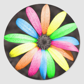 Rainbow daisy flower classic round sticker