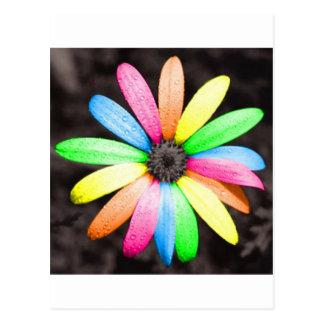 Rainbow daisy flower postcard