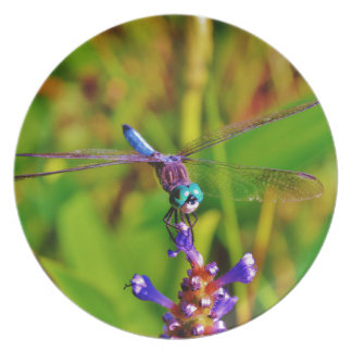Rainbow Dragonfly and flower Dinner Plate