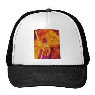 Rainbow Dragonfly on amber and fuschia Mesh Hats