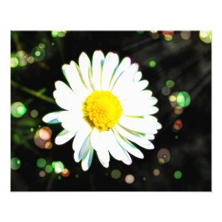 Rainbow Enchanted Flower Garden Print Art Photo