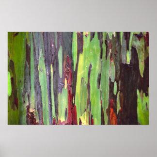 Rainbow Eucalyptus 1 Poster