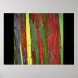 Rainbow Eucalyptus-1 Print