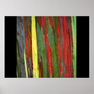 Rainbow Eucalyptus 2 Print