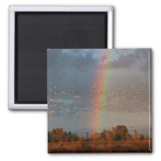 Rainbow & Geese - Magnet