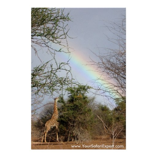 Rainbow & Giraffe Poster / Print (up to 35x52 in.)