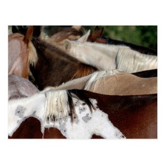 Rainbow Horses Postcard