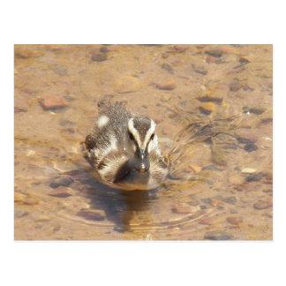 Rainbow Lake Duckling Postcard
